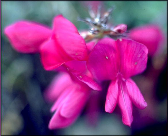 http://nature.ca/aaflora/images/b4261014.jpg