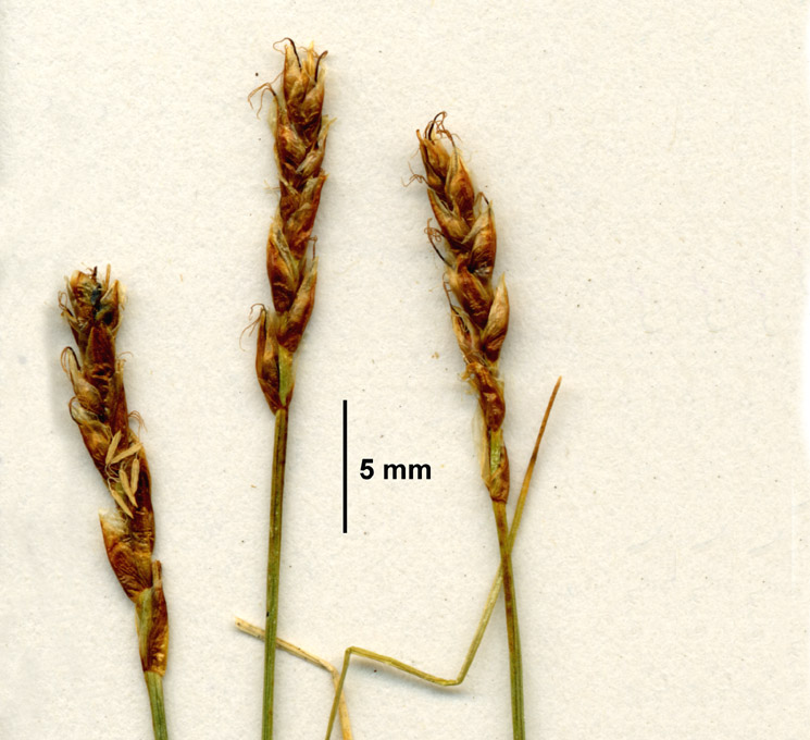 post anthesis
