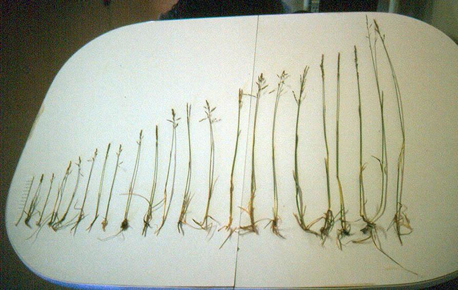 Variation In Plants Source of original image