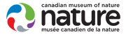 Logo: Canadian Museum of Nature – Musée canadien de la nature