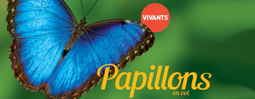 Texte : Papillons en vol. Vivants. Image : Un papillon bleue.